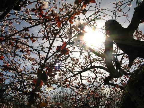 blossom-tree-14.jpg