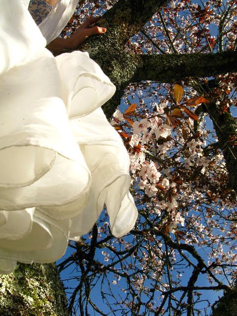 blossom-tree-19.jpg