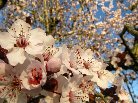 blossom-tree-20.jpg