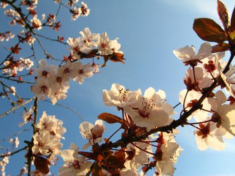 blossom-tree-21.jpg