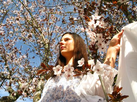 blossom-tree-5.jpg