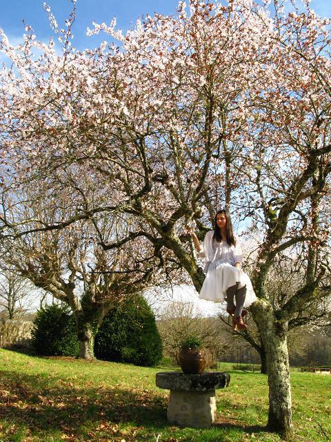 blossom-tree-9.jpg