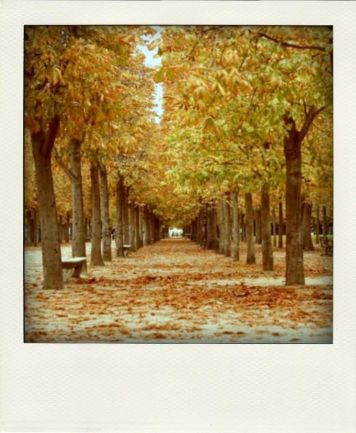 tuileries-123-pola02