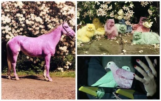 colorfull-animals