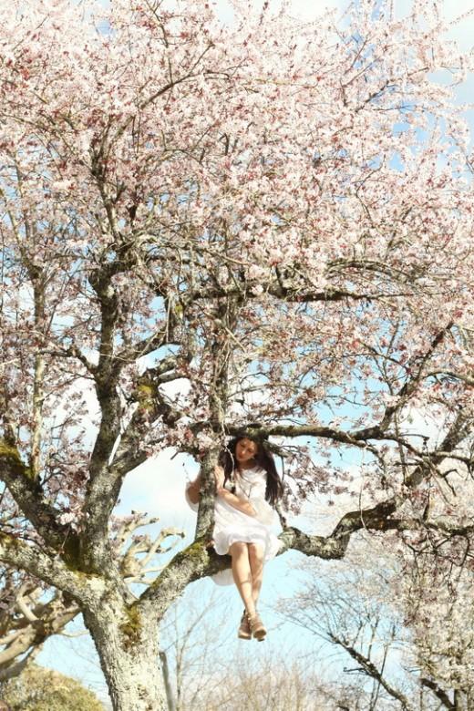 blossom-tree-11