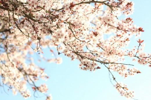 blossom-tree-14