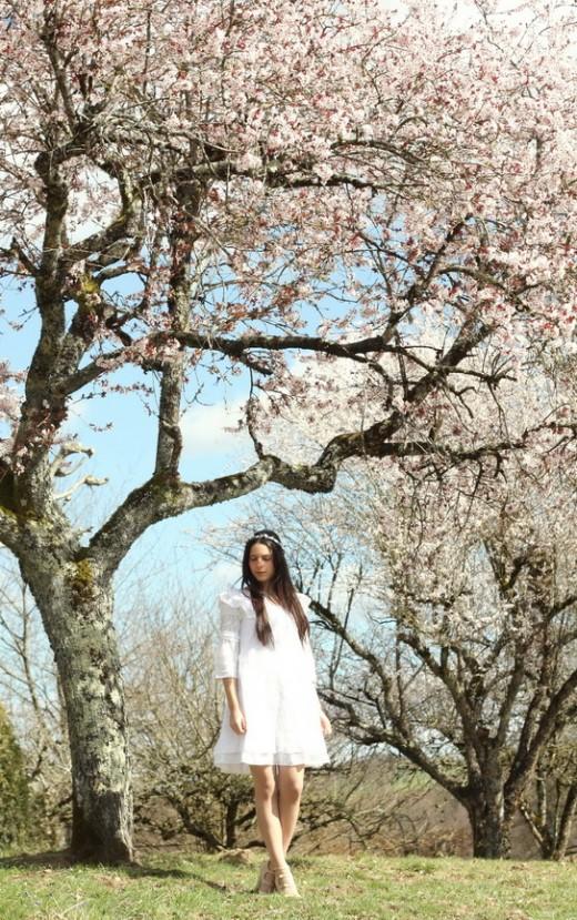 blossom-tree-15