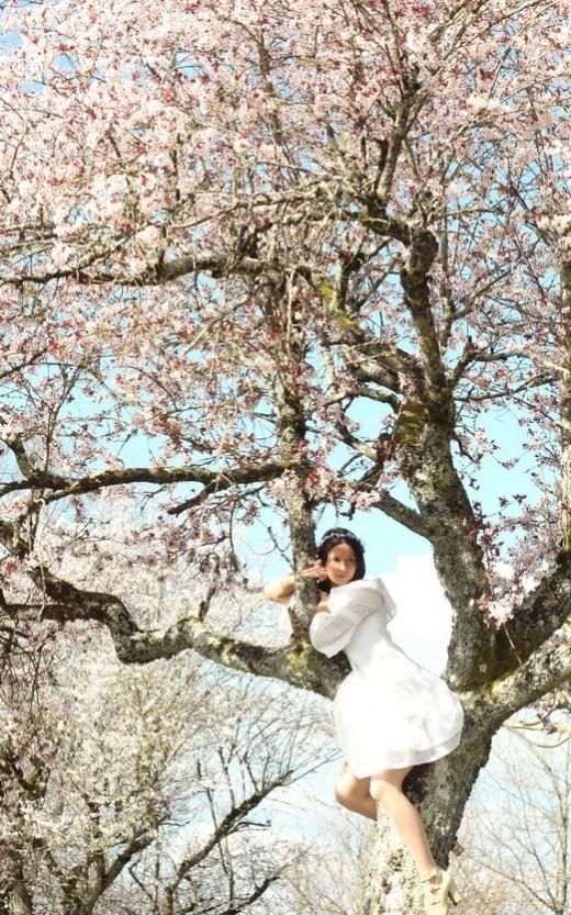 blossom-tree-5