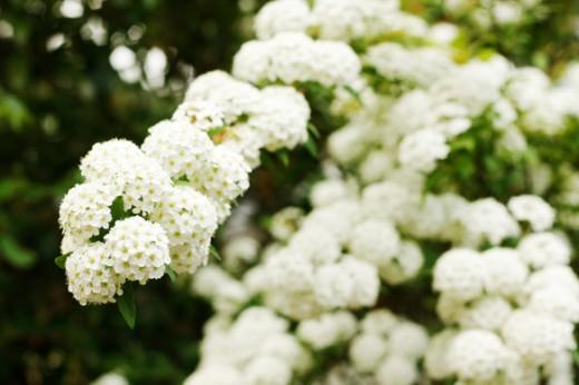 tokyo-garden-16
