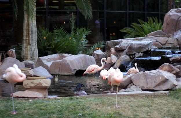 flamingo-123