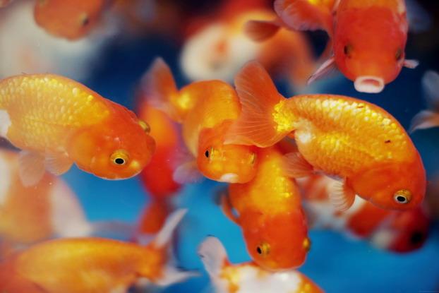 fish-market-01