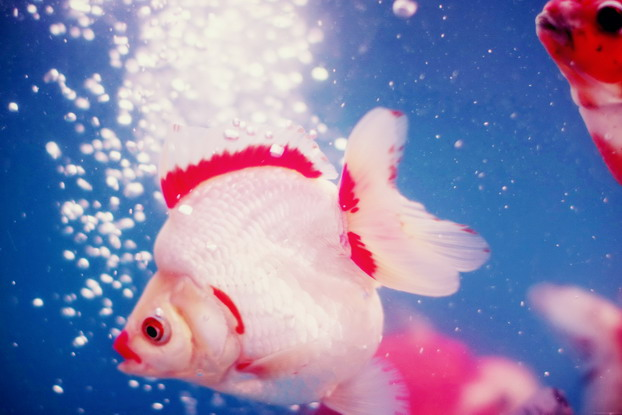 fish-market-06