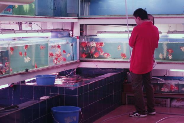 fish-market-09