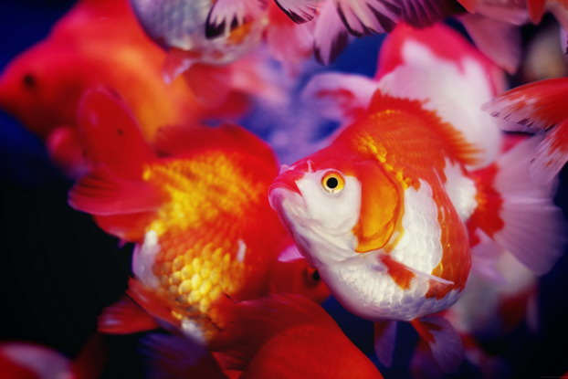 fish-market-16