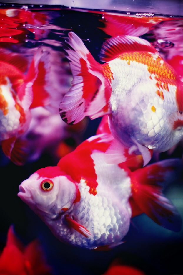 fish-market-18