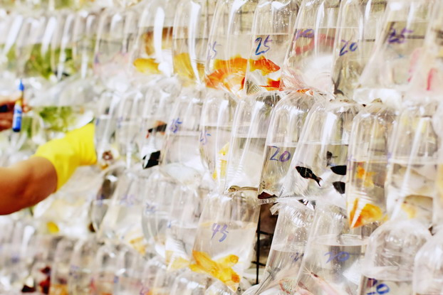 fish-market-20