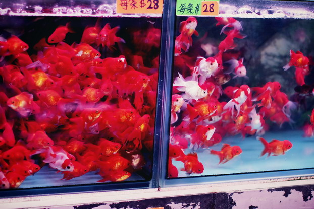 fish-market-23