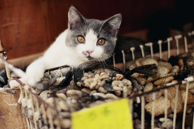 fish-market-26