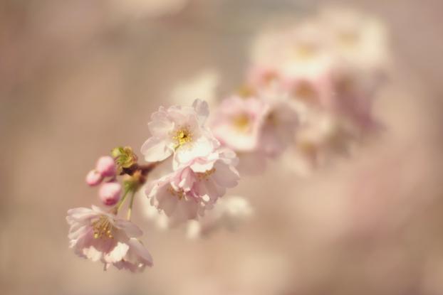 petals-09