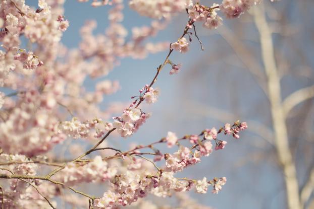 petals-10