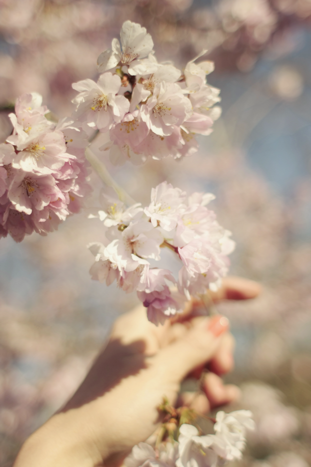 petals-111