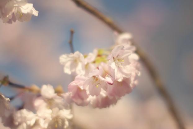 petals-12