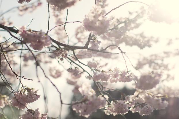 petals-13