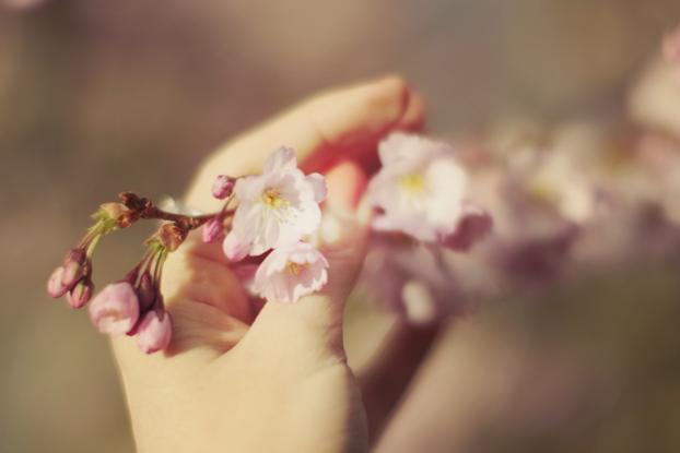 petals-15