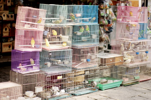 hong-kong-bird-market-02