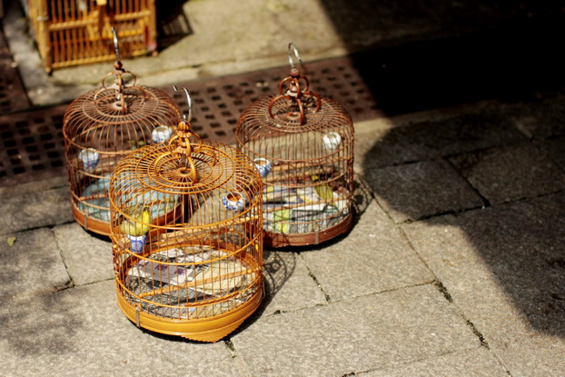 hong-kong-bird-market-04