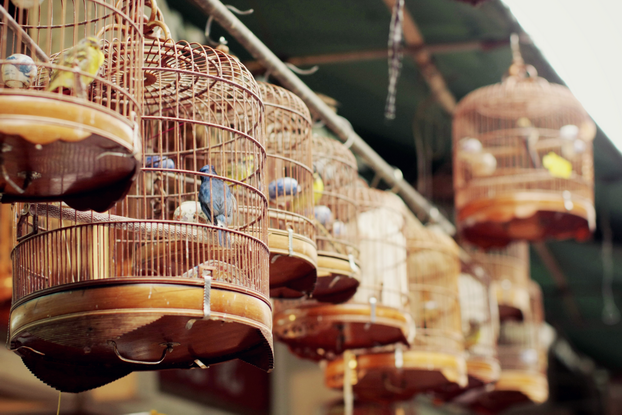 hong-kong-bird-market-20