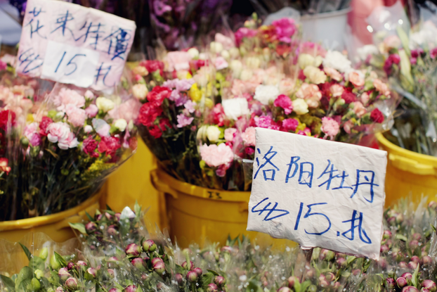hong-kong-flower-market-11