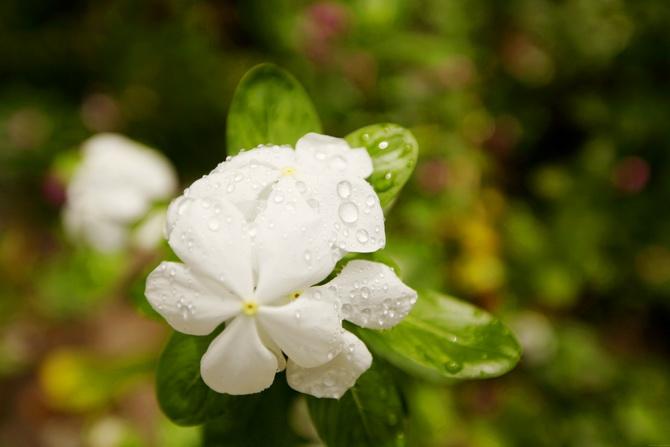 The Cherry Blossom Girl - Maldives 16