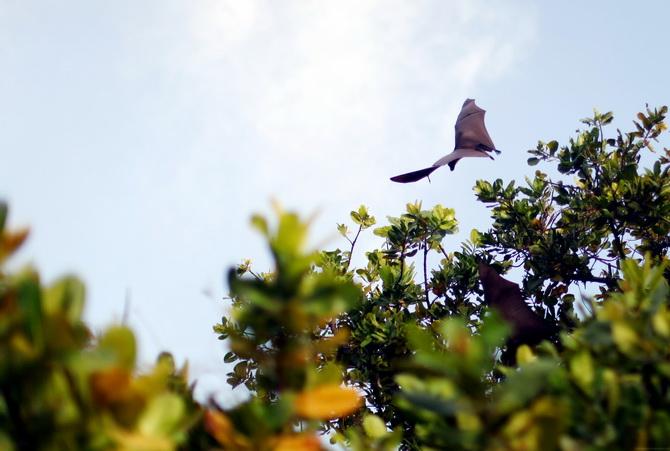 The Cherry Blossom Girl - Maldives 21