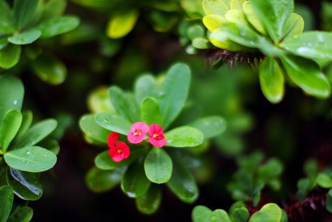 The Cherry Blossom Girl - Maldives 159