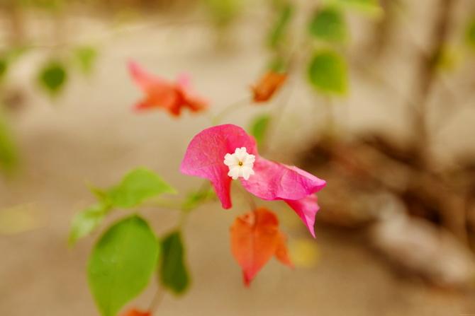The Cherry Blossom Girl - Maldives 68