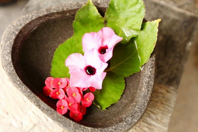 The Cherry Blossom Girl - Maldives 70