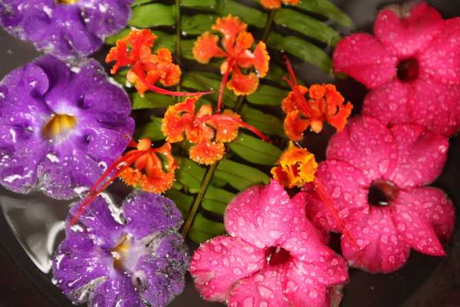 The Cherry Blossom Girl - Maldives 85