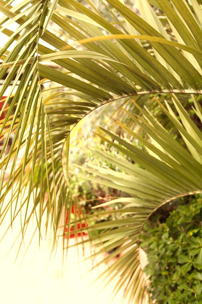 Jardin Escondido Francis Ford Coppola - Buenos Aires 09