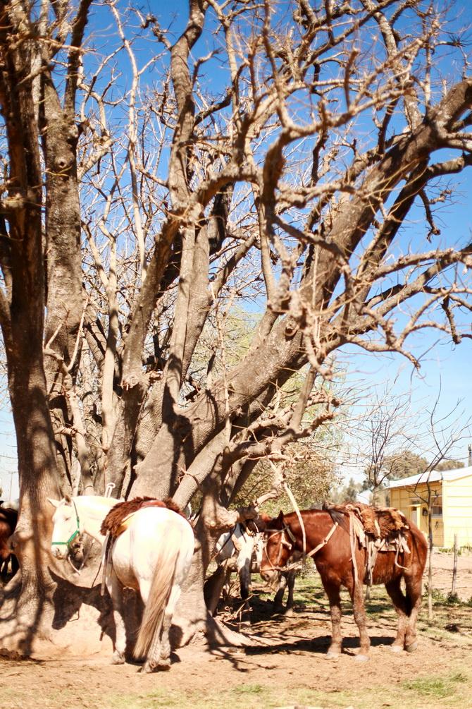 Estantia El Ombu - San Antonio De Areco - Argentina 31