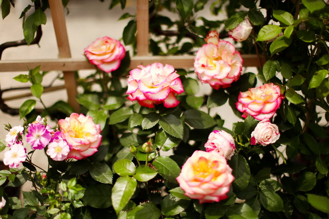 L'Art du Jardin 06