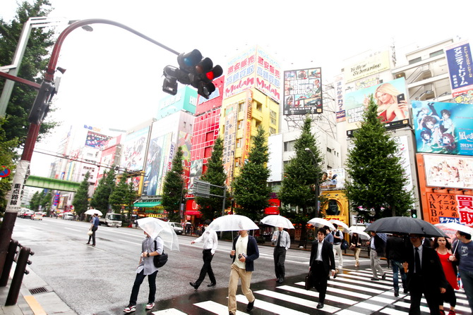 The Cherry Blossom Girl - Akihabara 13