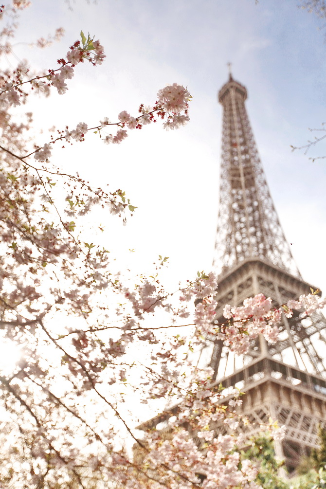 The Cherry Blossom Girl - Blossoms at the Eiffel Tower 16