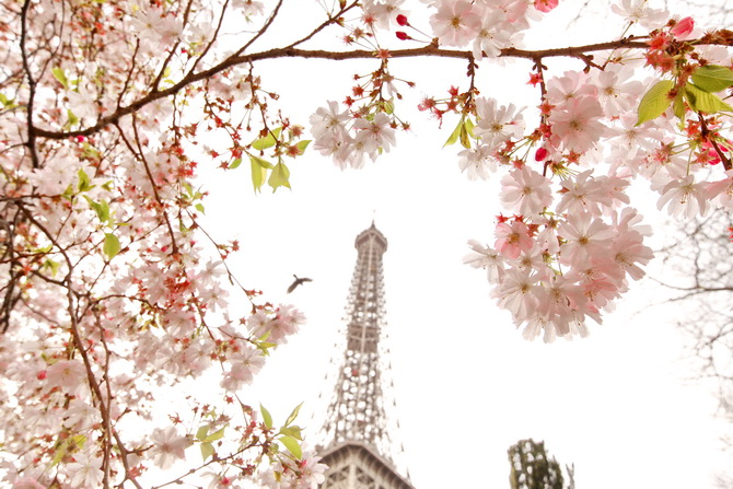The Cherry Blossom Girl - Blossoms at the Eiffel Tower 20