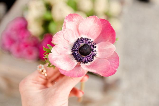 The Cherry Blossom Girl - Maasmechelen 27