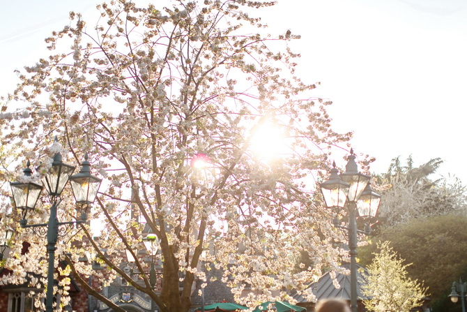 The Cherry Blossom Girl - Disneyland Paris Swing Into Spring 35