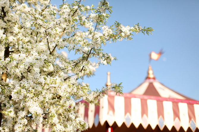 The Cherry Blossom Girl - Disneyland Paris Swing Into Spring 36