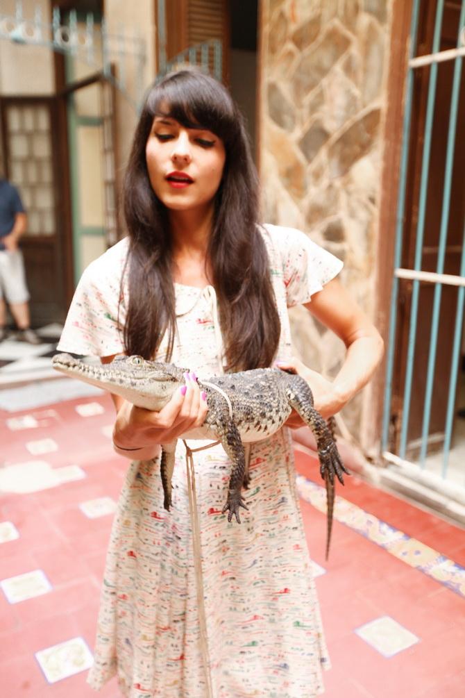 The Cherry Blossom Girl - Alligators 08