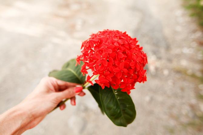 The Cherry Blossom Girl - Cienfuegos 20