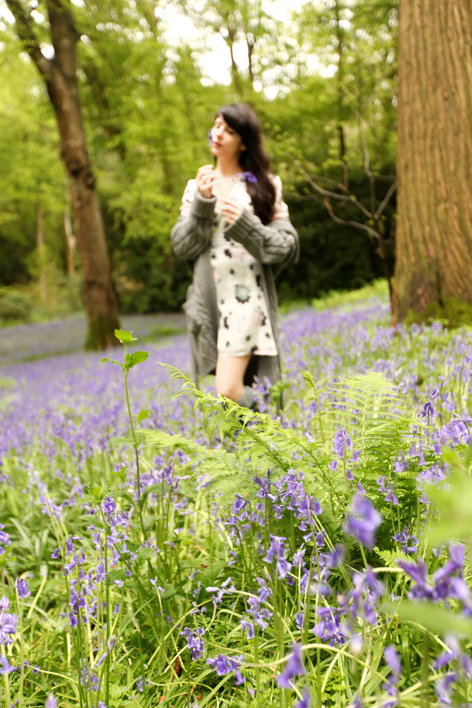 The Cherry Blossom Girl - Bluebells 05